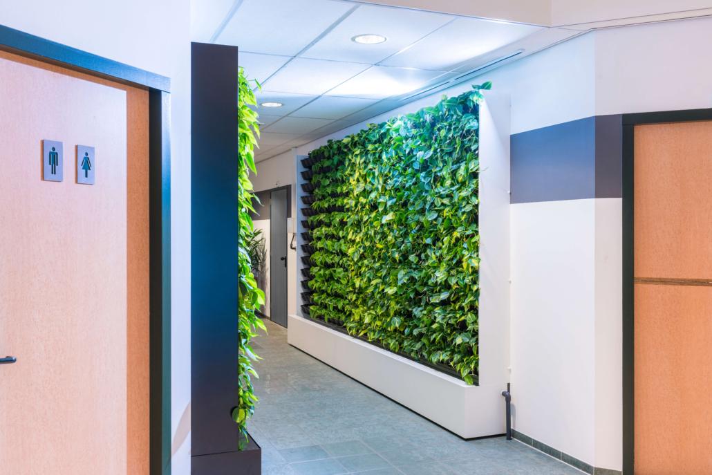 interieurbeplanting kantoorbeplanting alkmaar heerhugowaard