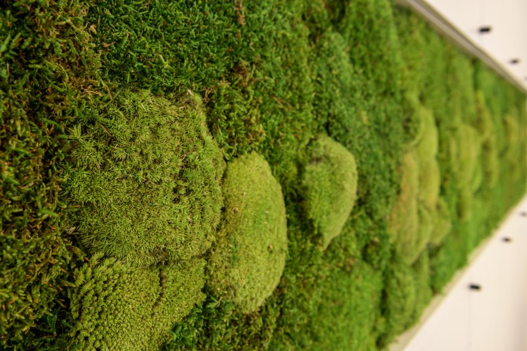 kantoorbeplanting projecten moswand
